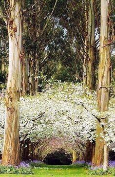 Bosque de eucaliptos, New Zealand