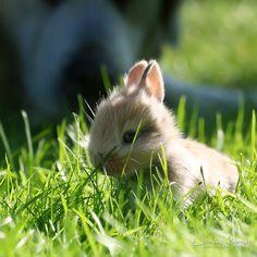 "cute bunny rabbit ""Where am I"" by Healzo (@DeviantArt 118199639)"