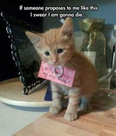 cute kitty wedding proposal