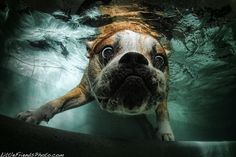 Series of excellent photos of dogs diving into water. Hilarious!