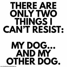 Generally true unless there's a Key Lime Pie nearby. Then I can't res - Funny Dog Quotes - The post Generally true unless there's a Key Lime Pie nearby. Then I can't res appeared first on Gag Dad. Dog Quotes Funny, Funny Dogs, Rescue Dog Quotes, Dog Quotes Love, Sweet Dog Quotes, Rescue Dogs, I Love Dogs, Puppy Love, Crazy Dog Lady