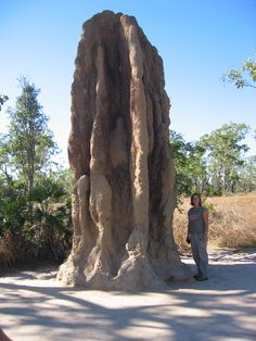 Magnetic Termite Mound in Litchfield National Park, Australia