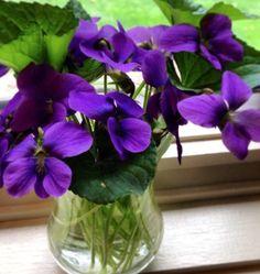 ♡❦✤PURPLE✤❦♡Spring violets on my windowsill ~ photo by Dara Arrangements Ikebana, Floral Arrangements, Purple Love, All Things Purple, Purple Flowers, Beautiful Flowers, Color Lavanda, Flower Cart, Sweet Violets