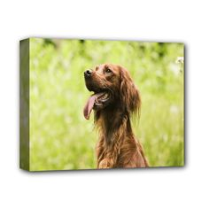 """Animal++Dog+Irish+Setter+Deluxe+Canvas+14""""+x+11""""+(Stretched)"""