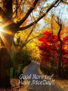 Good Morning Baby❤️ hope you rested well ! Can't wait to look into your gorgeous eyes soon and feel the calm rush through my whole body ! Good Morning Gorgeous, Good Morning Flowers, Good Morning Picture, Good Morning Good Night, Morning Pictures, Good Morning Wishes, Good Morning Images, Morning Pics, Fall Pictures