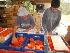 Comunidade de Nova Friburgo é exemplo de organização comunitária