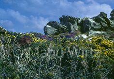 Pflanzen und Felsen
