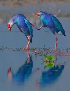 Animals Images, Animals And Pets, Funny Animals, Cute Animals, Most Beautiful Birds, Pretty Birds, Exotic Birds, Colorful Birds, Beautiful Creatures