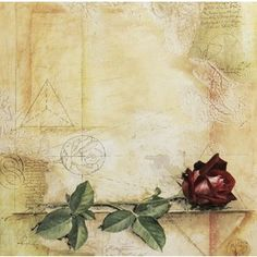 Rose 12 x 12 Paper