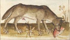 Bellifortis VerfasserKyeser, Conradus  ErschienenElsaß, [um 1460] Ms. germ. qu. 15  Folio 186r Medieval, Moose Art, Dogs, Animals, Middle Ages, Animales, Animaux, Pet Dogs, Mid Century