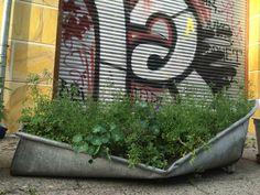 urban kraut's GreenFavs #Badewannenkraut @ #Helmholtzplatz Berlin Gewinnspiel @ http://Facebook.com/urbankraut #Greenfavs