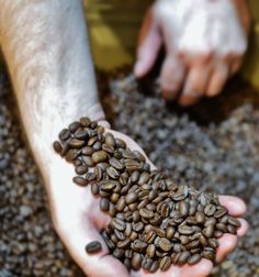 DYK? Our organic Sumatra coffee comes from plants grown on volcanic loam and a unique semi-washed method is used to process the coffee cherries. Get to know this exotic coffee in our latest blog post.
