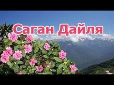 Чай из лекарственной травы Саган Дайля (Рододендрон Адамса), полезные св... Health, Youtube, Health Care, Salud, Youtubers