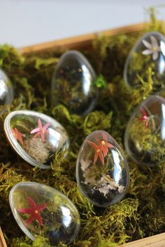 For a blooming twist on Easter eggs, put your green thumb to work with these mini Easter egg terrariums.
