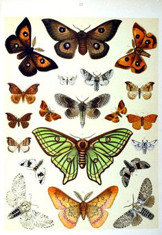 Die Schmetterlinge Europas (1910)