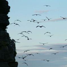 Birdrocks at Finnmarken Norway Arctic, Norway, Animals, Animales, Animaux, Animal, Animais