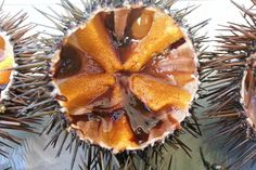 Ricci !! #ricettedisardegna #recipe #sardinia #pasta #sea #urchin