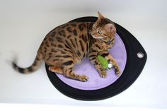 """Best Holiday Gift for Your Favorite Feline: Environmental Enrichment"" by Dr. Shelby Neely of Ask the Cat Doctor http://www.pettravelexperts.com/archives/4136"