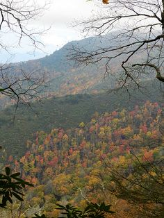 Nature's canvas, gettin' all painted up for fall in Great Smoky Mountains National Park.