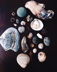 Wildthorne on Instagram: Ocean poetry, Petrified Wood and sea magick