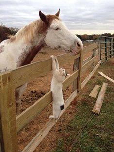 Cat and horse. Love this.