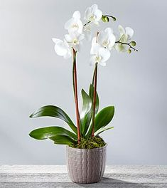 How to Grow and Maimtain Beautiful Orchids Indoors Orchid Flower Arrangements, Rosemary Plant, Growing Orchids, Orchid Care, All Flowers, Houseplants, Indoor Plants, Flower Power, Glass Vase
