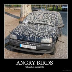 Angry Birds... not as much fun in real life.