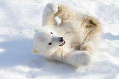 Love polar bear babies