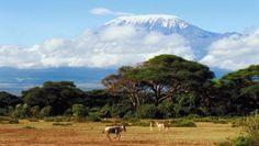 A Trek Travel cégnek hála az extrém túrára szomjazók sem maradnak programok nélkül 2013-ban: aki kedvet érez rá, elutazhat velük biciklizni a Kilimandzsáróra. Ilyen kalandra eddig kereskedelmi úton még nem vállalkozhatott senki.