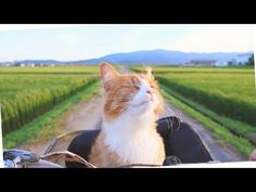 How I Trained My Cats - YouTube
