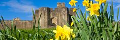 Caerphilly Castle with daffodils in foreground South Wales Valleys