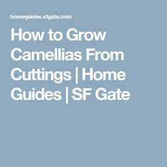 How to Grow Camellias From Cuttings | Home Guides | SF Gate