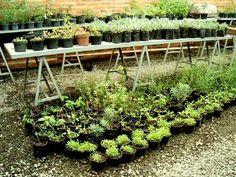 La producción de hierbas