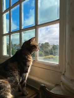 Our house cat Frincha