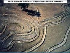 Permaculture swales on contour Permaculture Design Course, Design Guidelines, Backyard Farming, Natural Building, Contour, Homesteading, Gardening, Tips, Projects