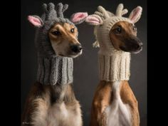 Not impressed with their owners choice of knitting project