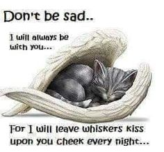 Nannys baby boy has gone over the rainbow bridge night night Mr Benji buttons . Crazy Cat Lady, Crazy Cats, Gato Angel, I Love Cats, Cute Cats, Pet Remembrance, Cat Memorial, Pet Loss, Animal Quotes