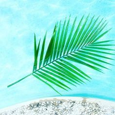Happy Weekend! #palmfrond #pool #nature #beauty #poolside #green #cabana #cabanapass