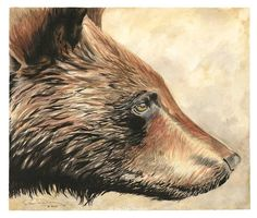 Watercolor painting of a cinnamon faze black bear.  Artist: Joe Day
