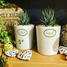 A touch of greenis all it takes to make me grin Succulent Wall Art, Succulents Garden, Bird Cage, Eco Friendly, Planter Pots, Take That, House Design, Touch, Homemade