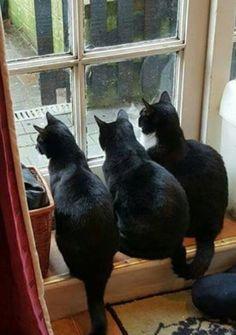 So beautiful. Black cats rock!!!