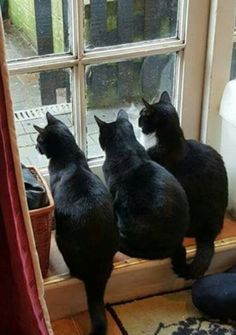 So beautiful. Black cats rock!!!