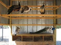 Roosts and nesting boxes