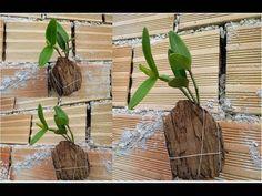 Orquideas Cymbidium, Bottle Cutter, Bokashi, Great Horned Owl, Glass Bottles, Youtube, Simple, Plants, Growing Vegetables