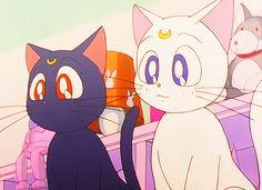 Diana Sailor Moon, Sailor Moon Screencaps, Sailor Moon Aesthetic, Anime Cat, Starco, Killua, Artemis, Furry Art, Otaku