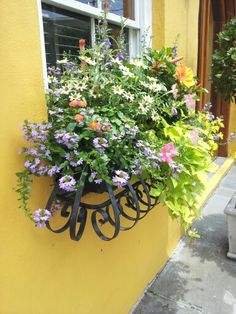 Happy colour comination in this window box :) Container Flowers, Container Plants, Container Gardening, Window Box Flowers, Flower Boxes, Window Planter Boxes, Window Sill, Garden Beds, Home And Garden