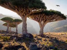 """Marooned in the Indian Ocean, this isolated archipelago of four islands claims hundreds of unique species and is well known for its alien landscape. If you think the shape of this Dracaena cinnabari tree is weird, wait until you find out that its name translates to """"dragon's blood tree"""" thanks to its red sap, which is traditionally used as a dye. —Jonathan ShannonRead more: Weird Natural Wonders You Won't Believe Are Real"""