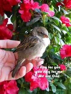 http://petra-herz.de/ https://www.facebook.com/petra.herz.75?fref=ts https://twitter.com/petra_herz #MasterSha, #DrandMasterSha, #ZhiGangSha, #MasterPetra, #MasterPetraHerz, #PetraHerz, #OpeningHeart, #Heart, #Divine, #Communication, #Transformingemotions, #emotions, #SoulHealer, #Healer, #Tao, #TheSource, #Miracles, #soulhealingmiracles, #Chanting,
