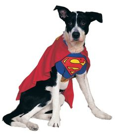 Rubies Costume DC Heroes and Villains Collection Pet Costume, Superman, Large - http://www.thepuppy.org/rubies-costume-dc-heroes-and-villains-collection-pet-costume-superman-large/