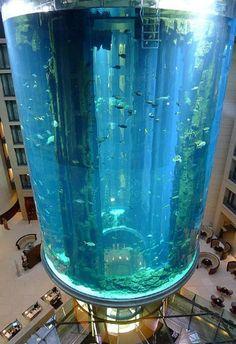 Cylindrical Aquarium in Berlin, Germany